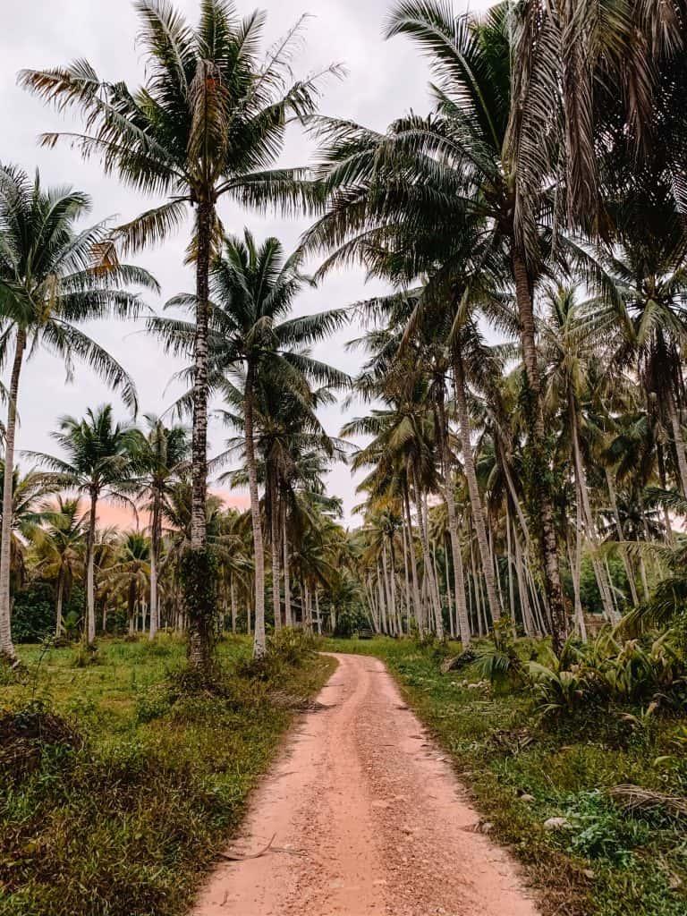 koh kood palm trees