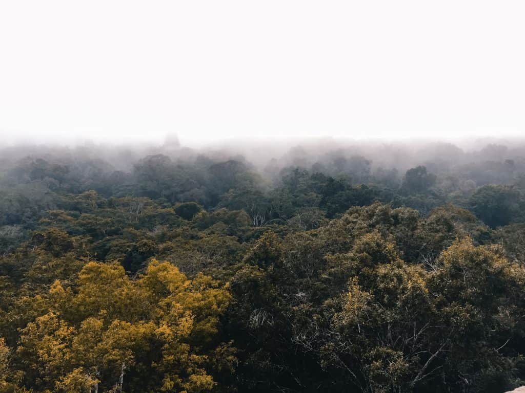 Tikal rainforest