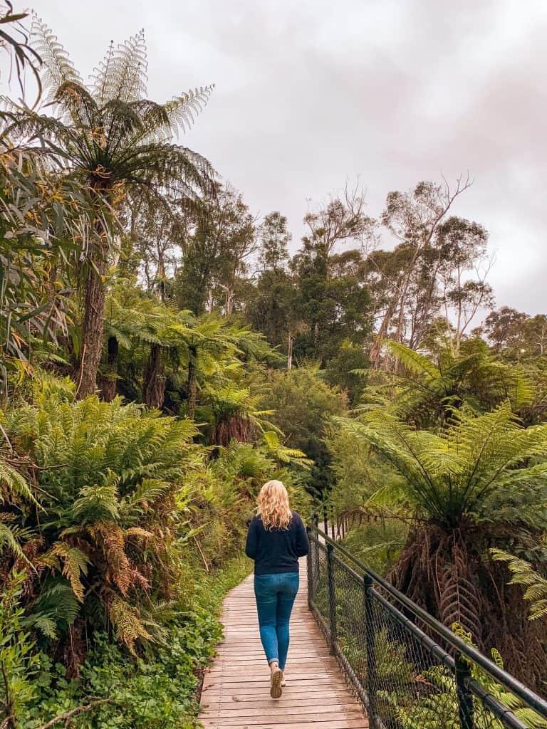 scenic walk, Katoomba